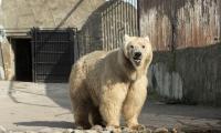 Мечият парк край Белица  затвори врати
