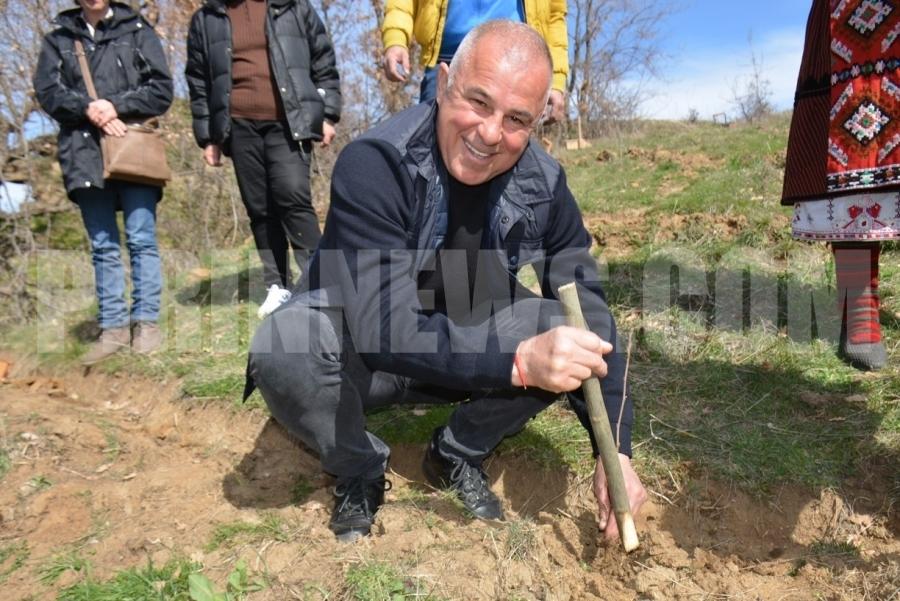 Кмет сади първа фиданка на кестенова гора
