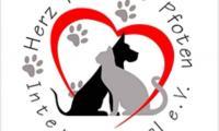 Сандански стартира кампания за кастрация на бездомните кучета и котки