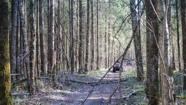 Бракониери опитаха да подпалят горски пункт в Разлог