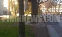 Вандали заляха дръвчета в центъра на Благоевград с разтвор ,за да изсъхнат