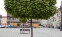 Община Благоевград засажда 25 нови дървета в града