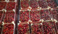 Цената на черешите в Благоевград според търговските настроения