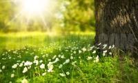Времето-слънчево и топло ще бъде днес