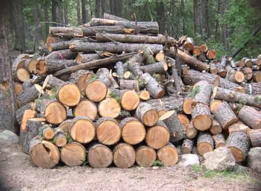 Цените на дървата за огрев от ЮЗДП са по-ниски тази година