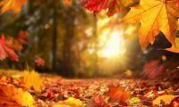 Красив и слънчев есенен ден ни очаква днес