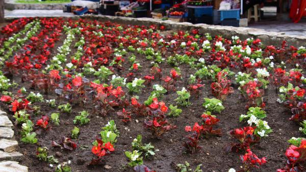 Ученици от Банско засадиха цветя по собствен проект