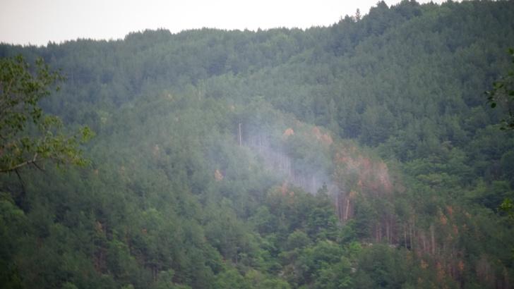 Паднало дърво върху далекопровод предизвика пожар в Кресненското дефиле