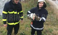 Пожарникари с мисия за връщане на патка-беглец