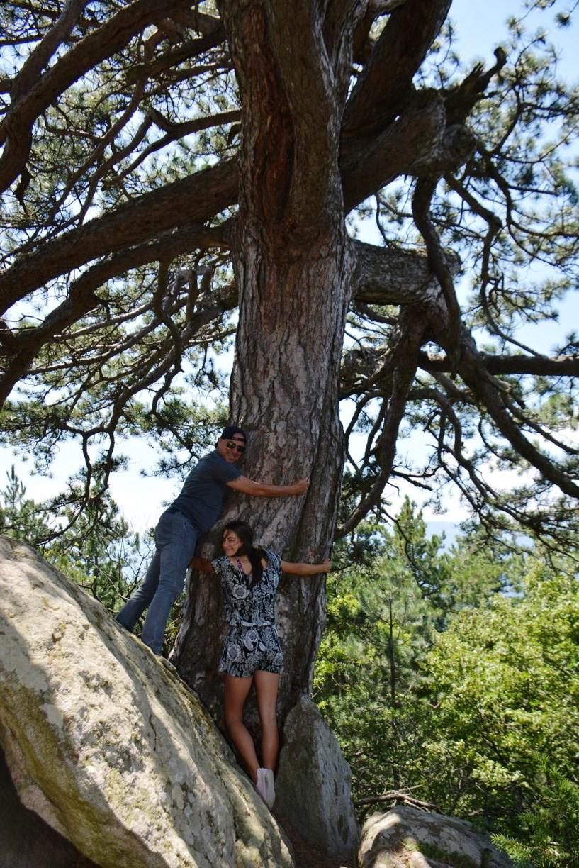 Симитличани прегръщат вековен бор,вярват че има целебна сила