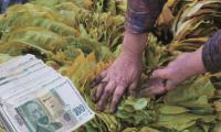 Производители искат изкупната цена на тютюна за  първо качество да стане 12 лева